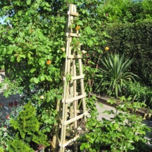 Trellis, Obelisks, Arches and Plant Supports